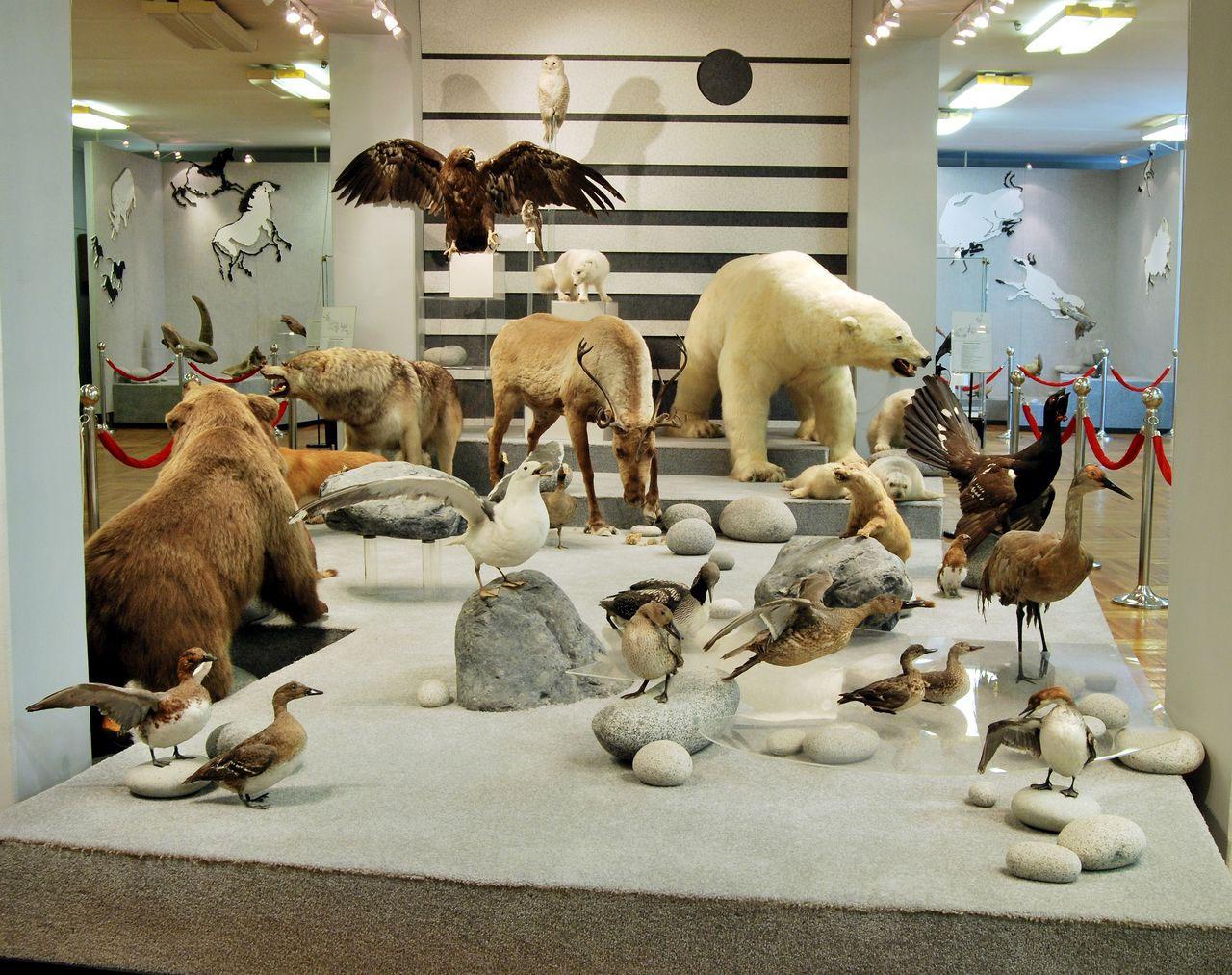 Магаданский Областной Краеведческий Музей, Магадан