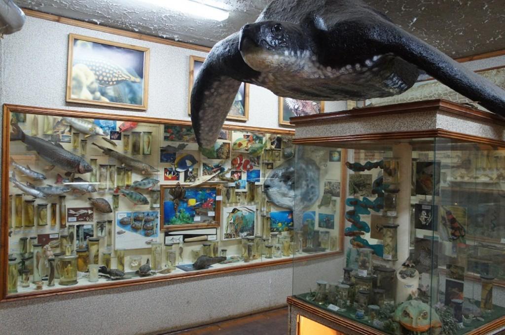 Зоологический музей, Самара